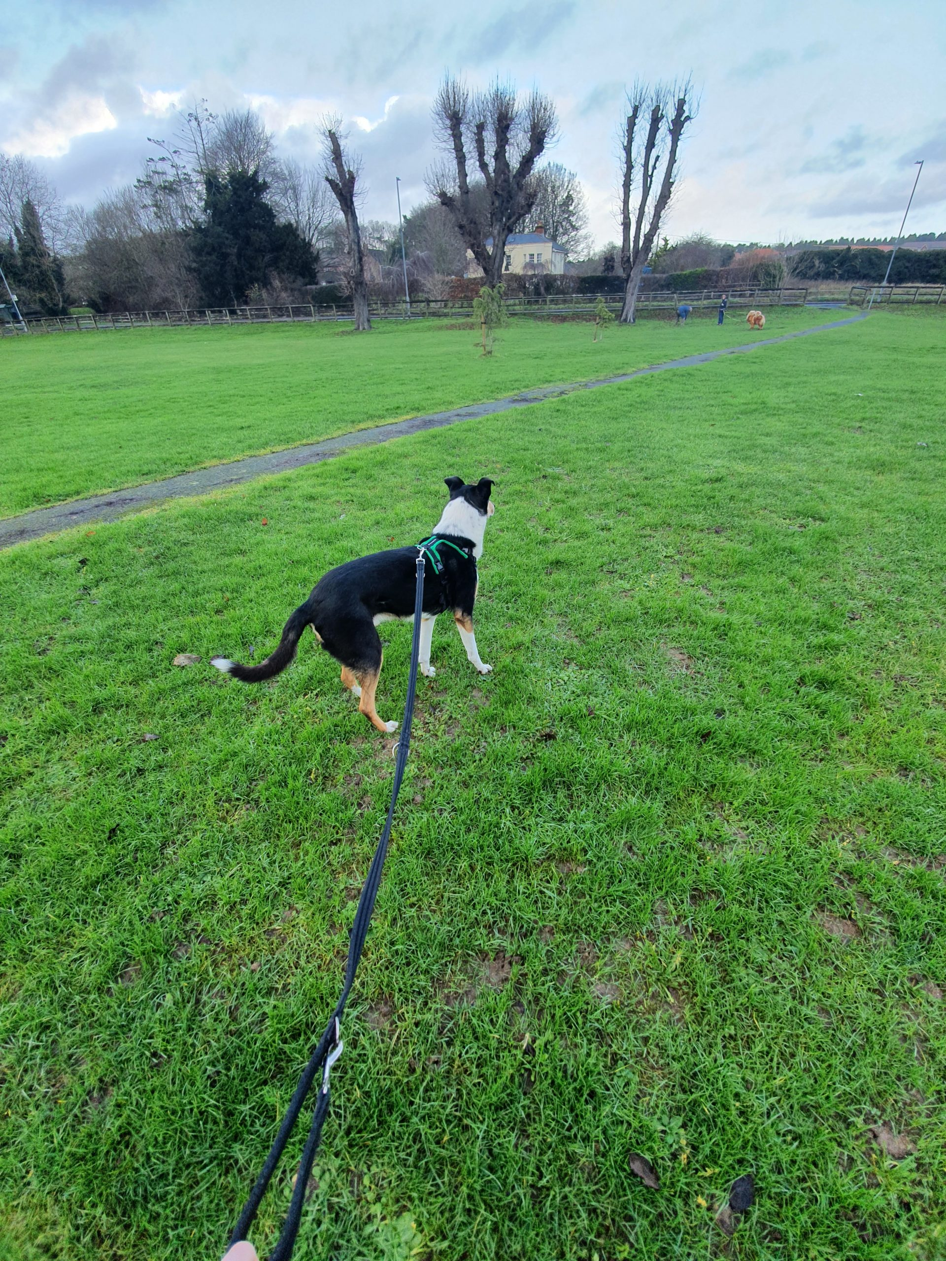 dog training behaviourist smooth collie andover winchester